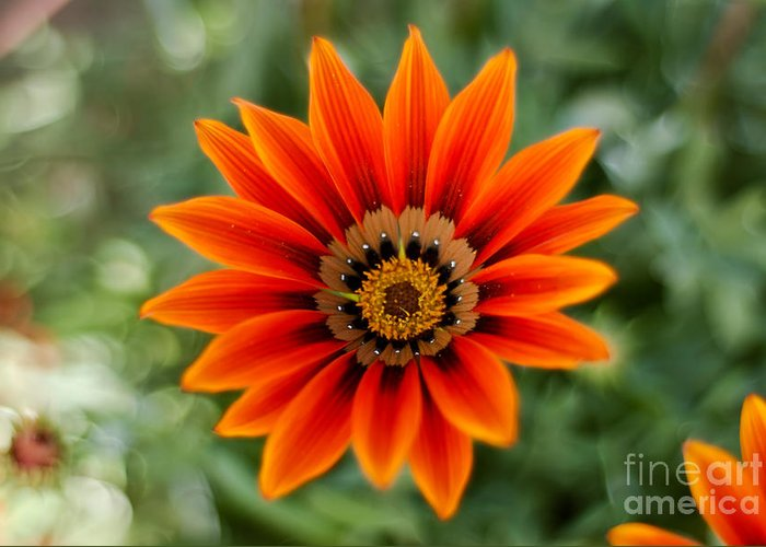 Flower Greeting Card featuring the photograph The Focused Eye by Syed Aqueel