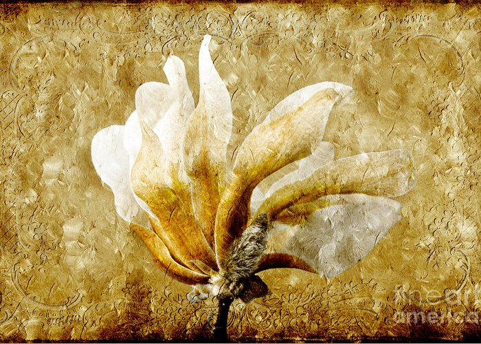 Magnolia Greeting Card featuring the photograph The Golden Magnolia by Andee Design