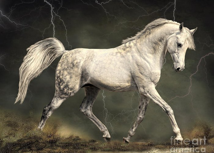 Horse Greeting Card featuring the digital art The Gray by Dawn Young