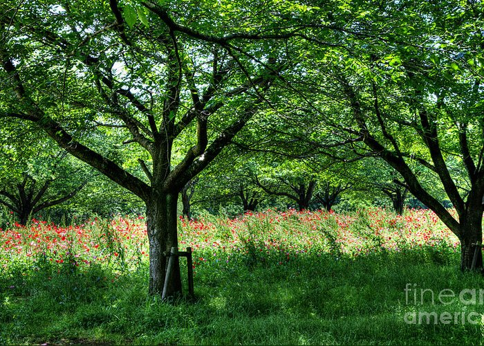 Hdr Greeting Card featuring the photograph The Hill Where A Poppy Blooms by Tad Kanazaki
