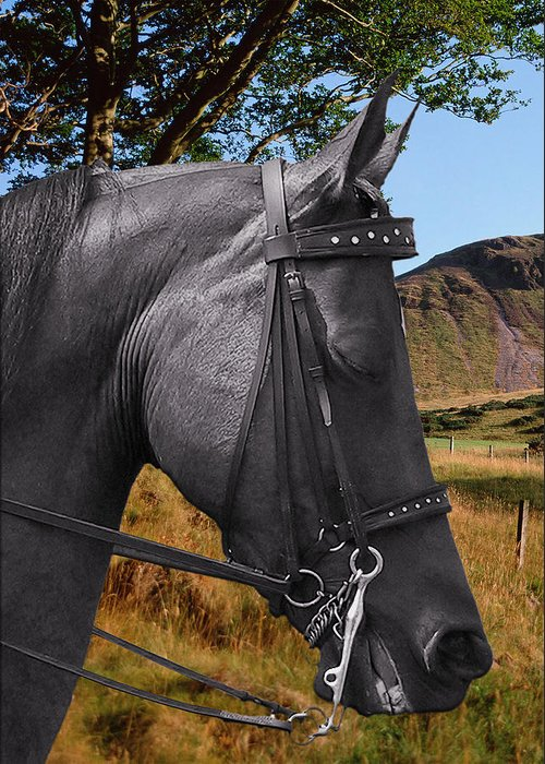 Horses Greeting Card featuring the photograph The Horse - God's Gift To Man by Christine Till