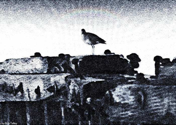 Water Greeting Card featuring the photograph The Jetty Bird by Ronald Talley