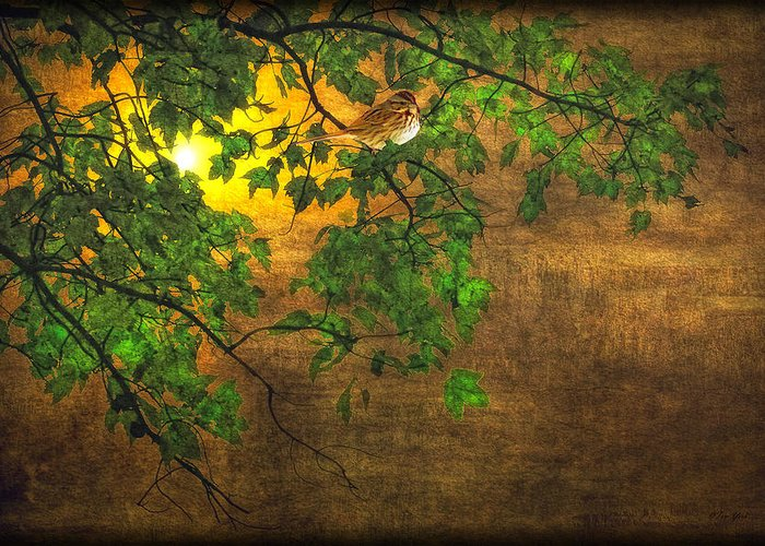 Bird Greeting Card featuring the photograph The Little Sparrow In The Tree by Tom York Images