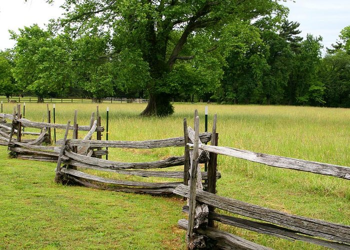 Nature Greeting Card featuring the photograph The Old Fence by Valia Bradshaw
