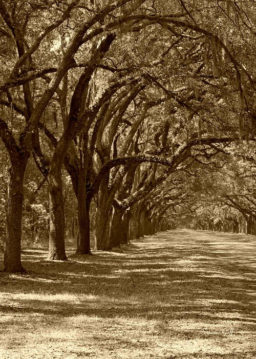 Fine Art Greeting Card featuring the photograph The Old South Series In Sepia by Suzanne Gaff