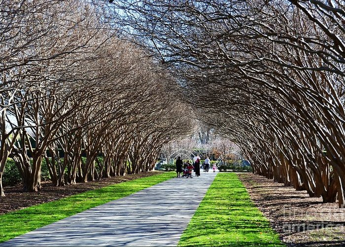 Arboretum Greeting Card featuring the photograph The Path by Debbi Granruth