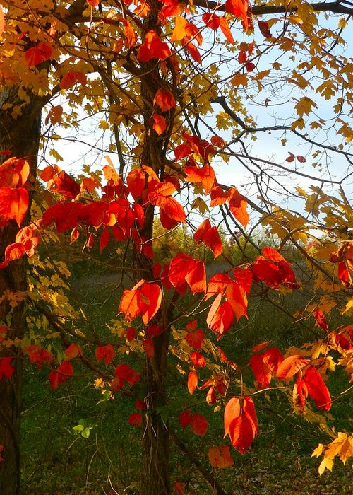 Autumn Greeting Card featuring the photograph The Reds Of Autumn by Julie Dant