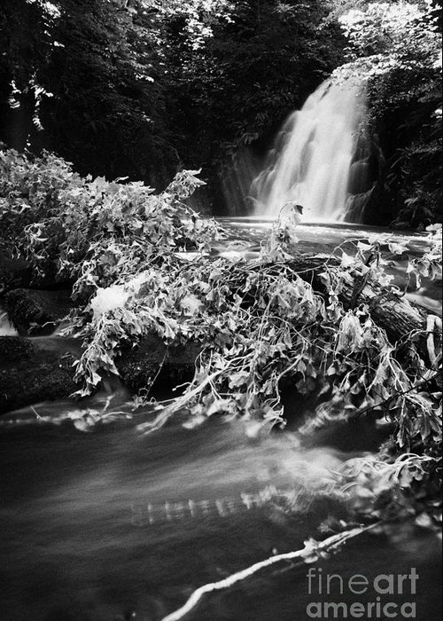 Glenoe Greeting Card featuring the photograph the river at the Gleno or Glenoe Waterfall beauty spot county antrim by Joe Fox