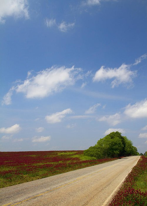 Crimson Greeting Card featuring the photograph The Road Ahead Is Lined In Red by Kathy Clark