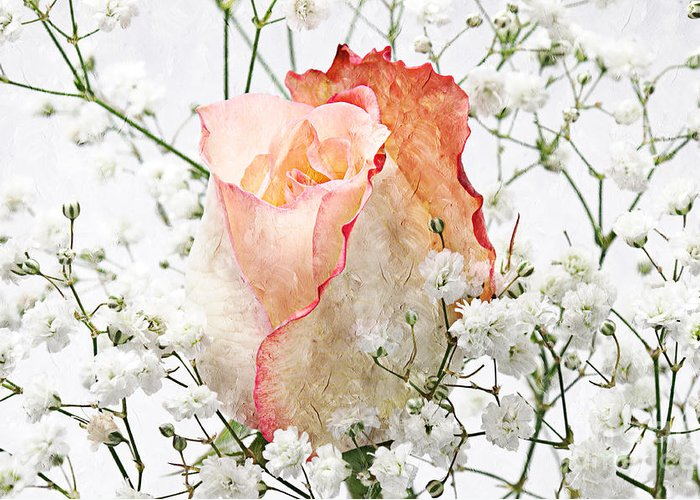 Pink Rose Greeting Card featuring the photograph The Rose by Andee Design