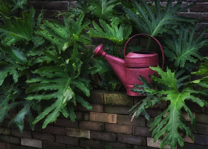 Hattiesburg Greeting Card featuring the photograph The Watering Can by Brenda Bryant