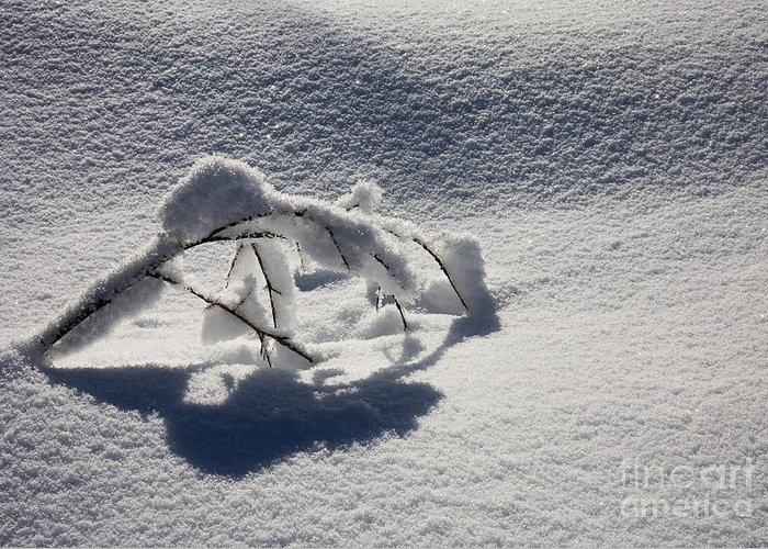 Sapling Greeting Card featuring the photograph The Weight of Winter by Mike Dawson