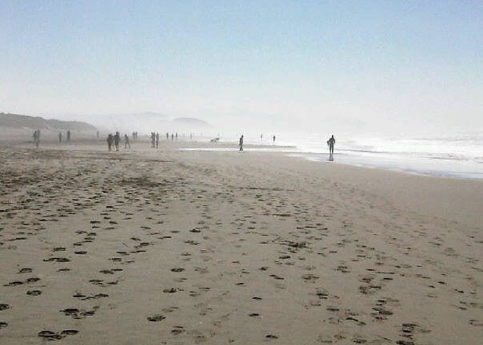Ocean Beach Greeting Card featuring the photograph They Walk Among Us by Nimmi Solomon