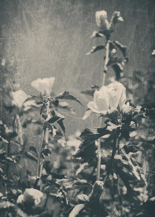 Roses Greeting Card featuring the photograph This Glorious Sadness by Laurie Search