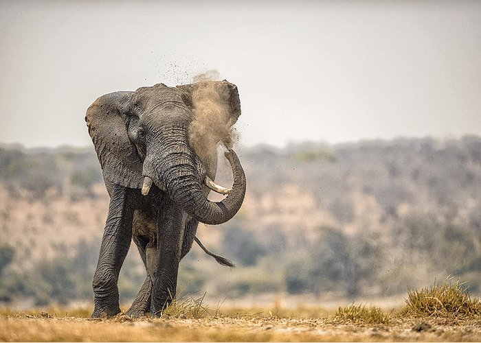 Chobe Greeting Card featuring the photograph This Is Botswana No. 8 - Feels So Good by Paul W Sharpe Aka Wizard of Wonders