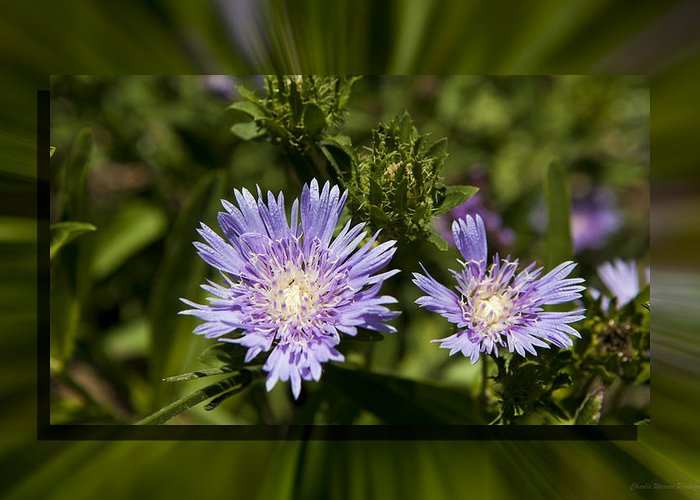 Thistle Greeting Card featuring the photograph Thistle 131 by Charles Warren