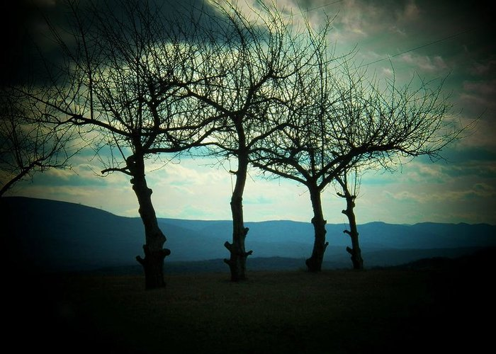 West Virginia Greeting Card featuring the photograph Three Trees by Joyce Kimble Smith
