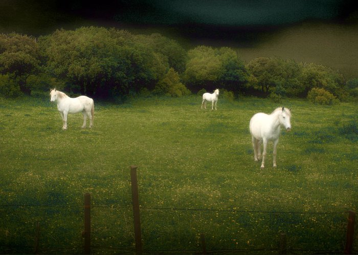 Horses Greeting Card featuring the photograph Three White Horses by Jim Painter