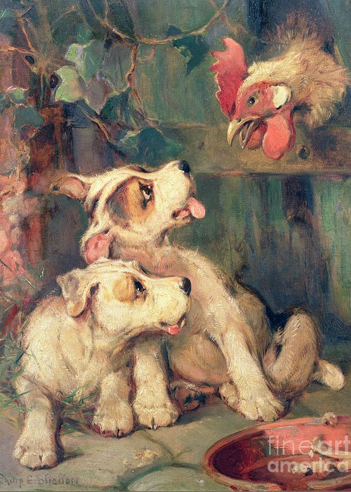 Cockerel; Rooster; Puppy; Bone; Puppies Greeting Card featuring the painting Three's A Crowd by Philip Eustace Stretton