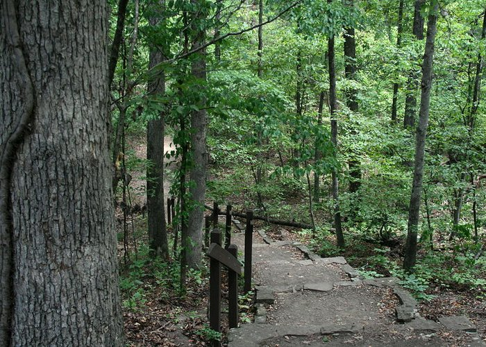 Arkansas Greeting Card featuring the photograph Through The Woods by CGHepburn Scenic Photos