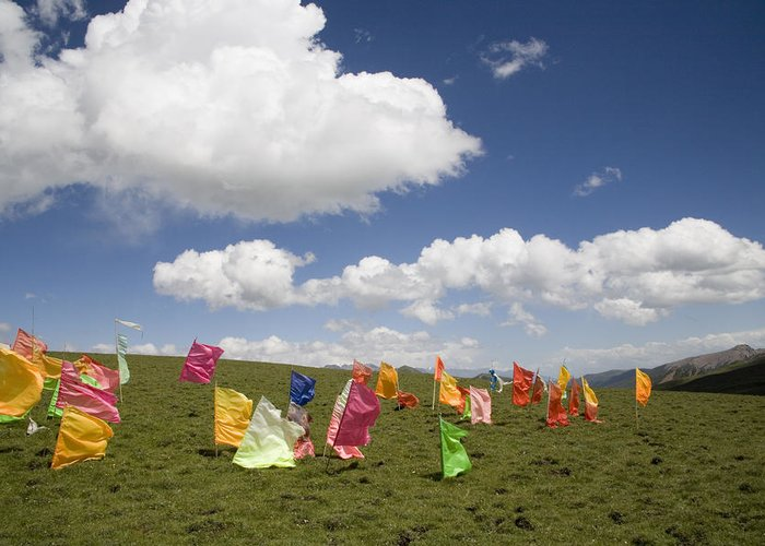 Qinghai Province Greeting Card featuring the photograph Tibetan Prayer Flags In A Field by David Evans