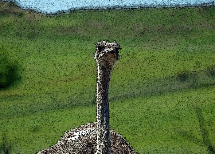 Ostrich Greeting Card featuring the photograph Ticket Please by Teri Schuster