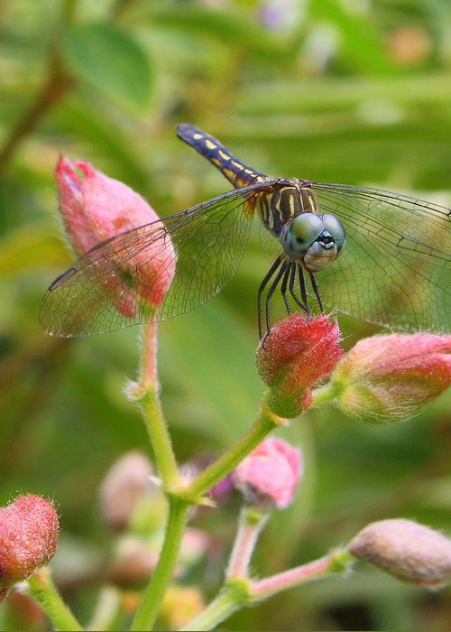 Dragonfly Greeting Card featuring the photograph Tiny Too by LC Linda Scott