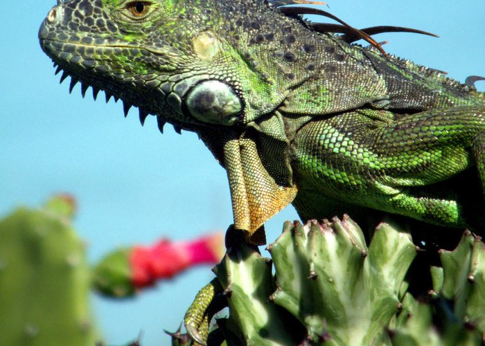 Reptiles Greeting Card featuring the photograph To The Point by Karen Wiles
