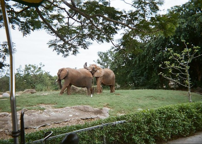 Elephant Greeting Card featuring the photograph Too Close For Comfort by Val Oconnor