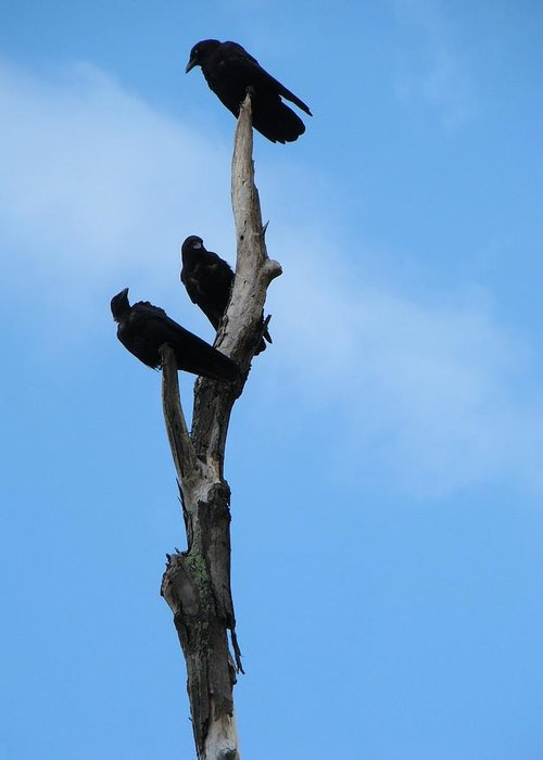 Crows Mingling Greeting Cards