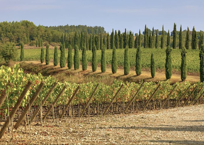 Vineyards Greeting Card featuring the photograph Toscana by Joana Kruse