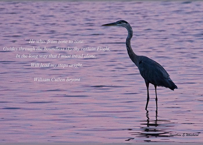 Quotes Greeting Card featuring the photograph Treading Alone  Great Blue Heron by Jonathan Whichard
