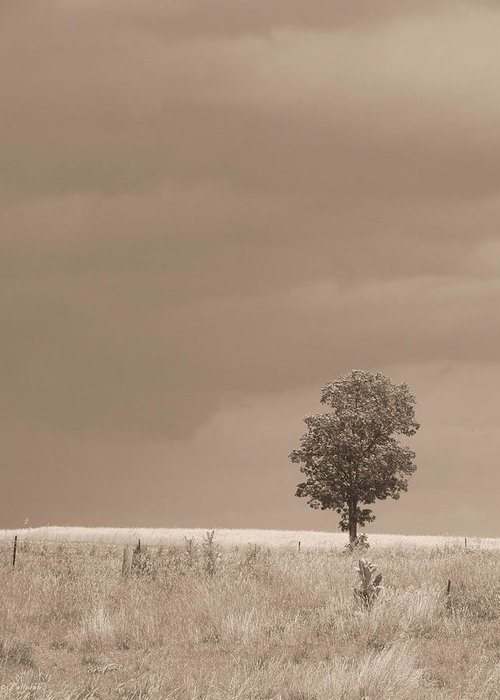 Nature Greeting Card featuring the photograph Tree Before Storm Sepia by Tallulah P