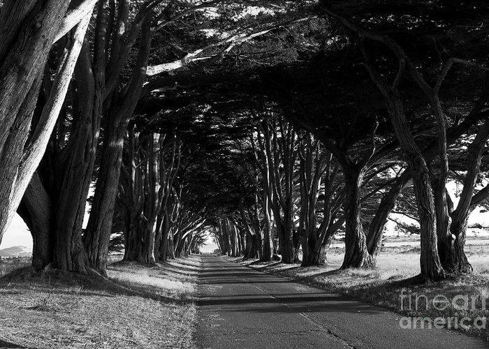 Black And White Greeting Card featuring the photograph Tree Canopy Promenade Road Drive . 7d9977 . Black And White by Wingsdomain Art and Photography