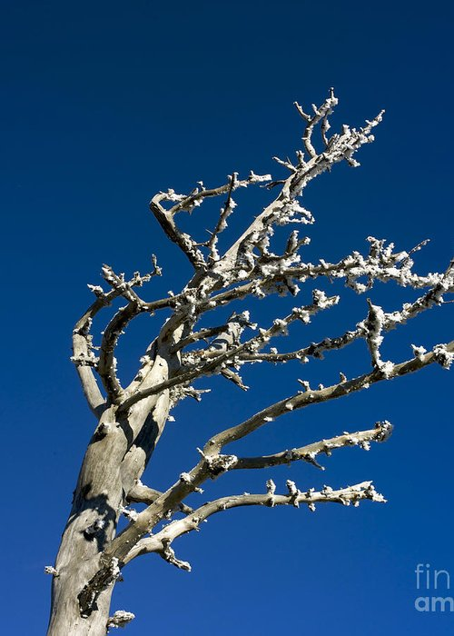Wintry Greeting Card featuring the photograph Tree In Winter Against A Blue Sky by Bernard Jaubert