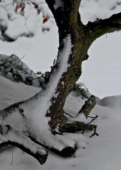 Tree Greeting Card featuring the photograph Tree In Winter by Odd Jeppesen