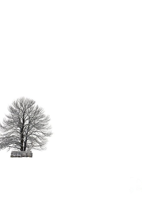 Landscape Greeting Card featuring the photograph Tree Isolated Under The Snow In The Middle Field In Winter. by Bernard Jaubert