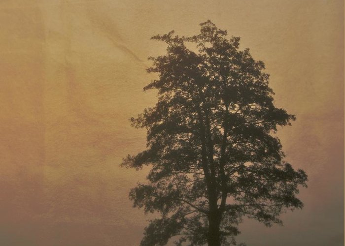Tree Greeting Card featuring the photograph Tree by Odd Jeppesen