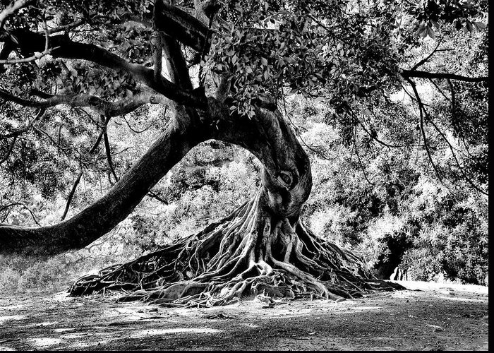 Tree Greeting Card featuring the photograph Tree Of Life - Bw by Kenneth Mucke