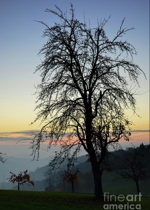 Photograph Greeting Card featuring the photograph Tree Silhouette At Sunset 2 by Bruno Santoro