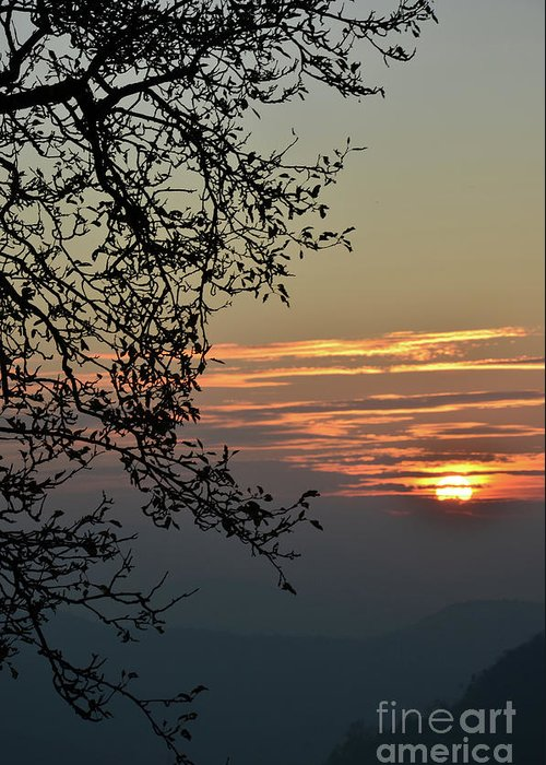 Photograph Greeting Card featuring the photograph Tree Silhouette At Sunset by Bruno Santoro