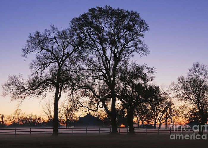 Beautiful Greeting Card featuring the photograph Trees And Fence In The Mist by Jeremy Woodhouse
