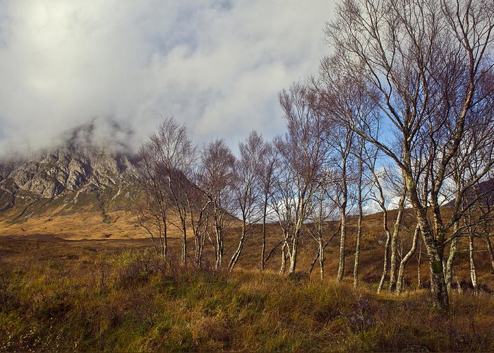Argyll And Bute Greeting Card featuring the photograph Trees Below Stob Dearg by Gary Eason