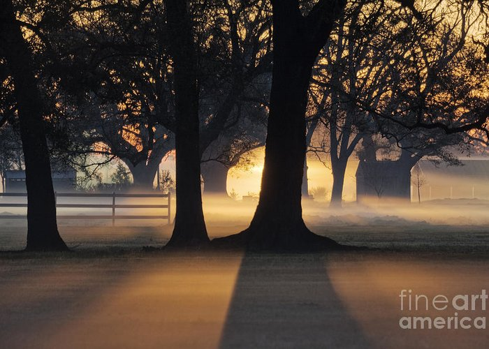 Architecture Greeting Card featuring the photograph Trees In The Morning Mist by Jeremy Woodhouse