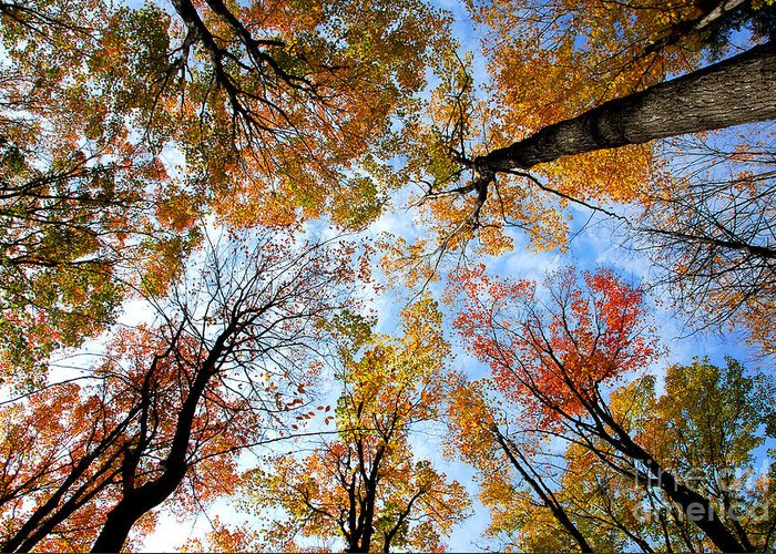 Fall Greeting Card featuring the photograph Treetops by Elena Elisseeva