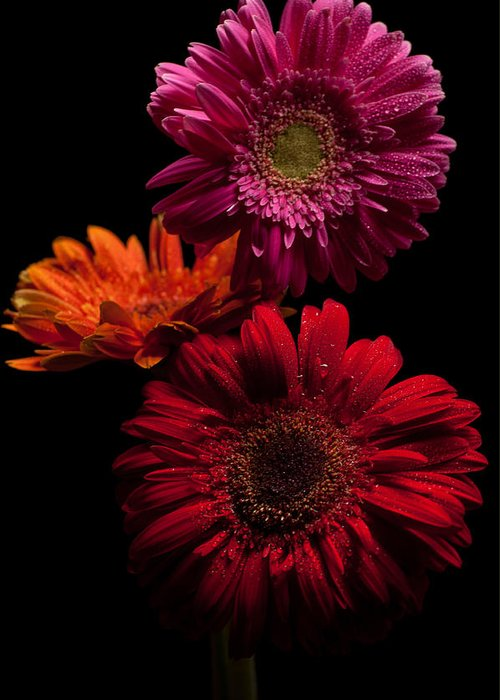 Flowers Greeting Card featuring the photograph Trio by Ron Smith