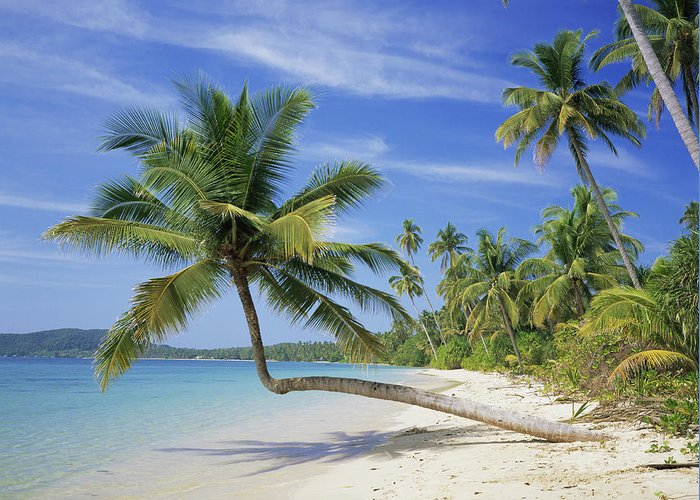 Tree Greeting Card featuring the photograph Tropical Beach by Bjorn Svensson