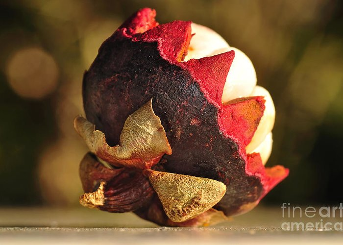 Photography Greeting Card featuring the photograph Tropical Mangosteen - The Medicinal Fruit by Kaye Menner