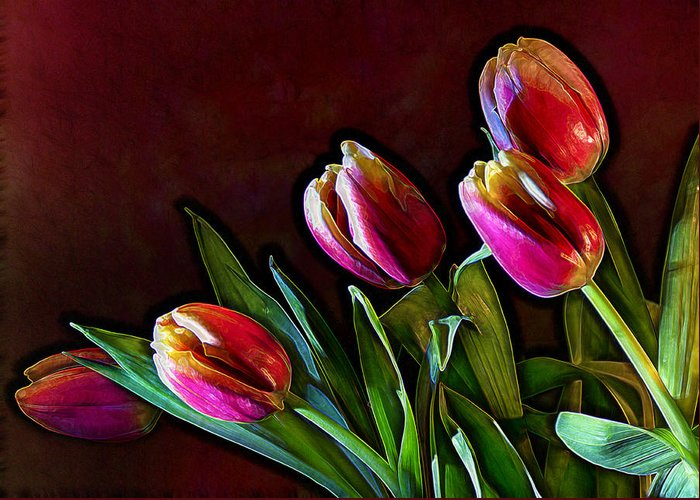 Flower Greeting Card featuring the photograph Tulip Traced Incandescence by Bill Tiepelman