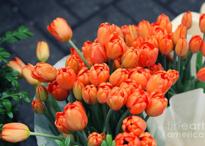 Tulip Greeting Card featuring the photograph Tulips by Leslie Leda